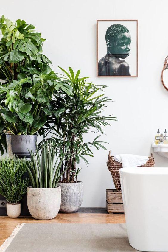Top 10: planten in het interieur – JaimyInterieur